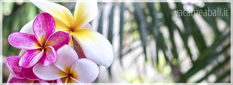 5 motivi per partire subito per un viaggio a Bali