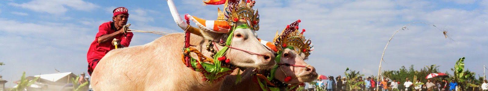 Makepung Buffalo Races: la corsa dei bufali di Bali