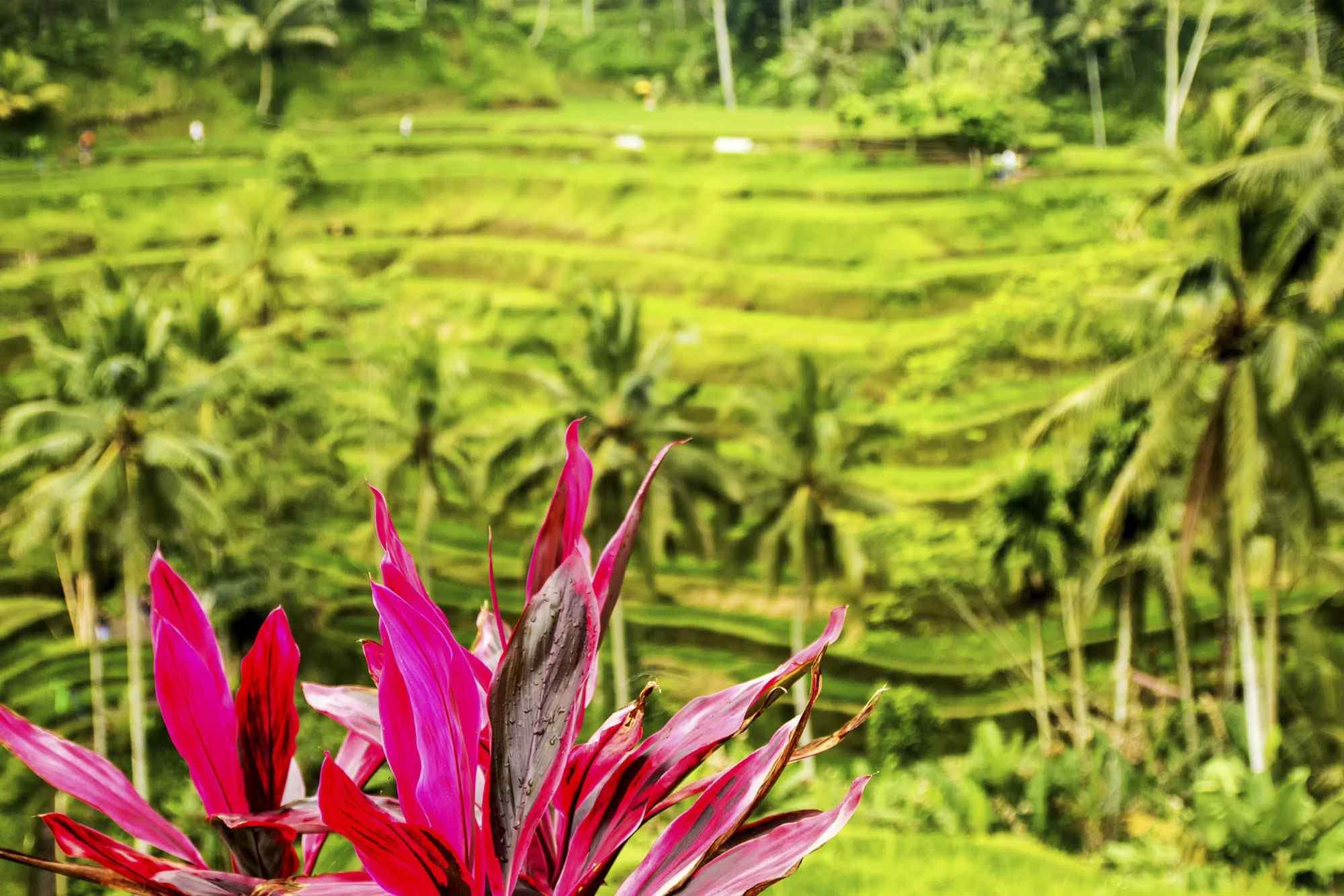 Il meglio di Bali in due giorni fra arte, natura e cultura