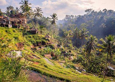 Tour-di-Ubud-risaie tegalalang