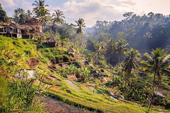 Tour di Ubud: una giornata tra cultura e natura