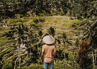 tour del Kintamani risaie di tegalalang