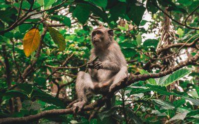 Foresta delle scimmie di Ubud: la guida completa