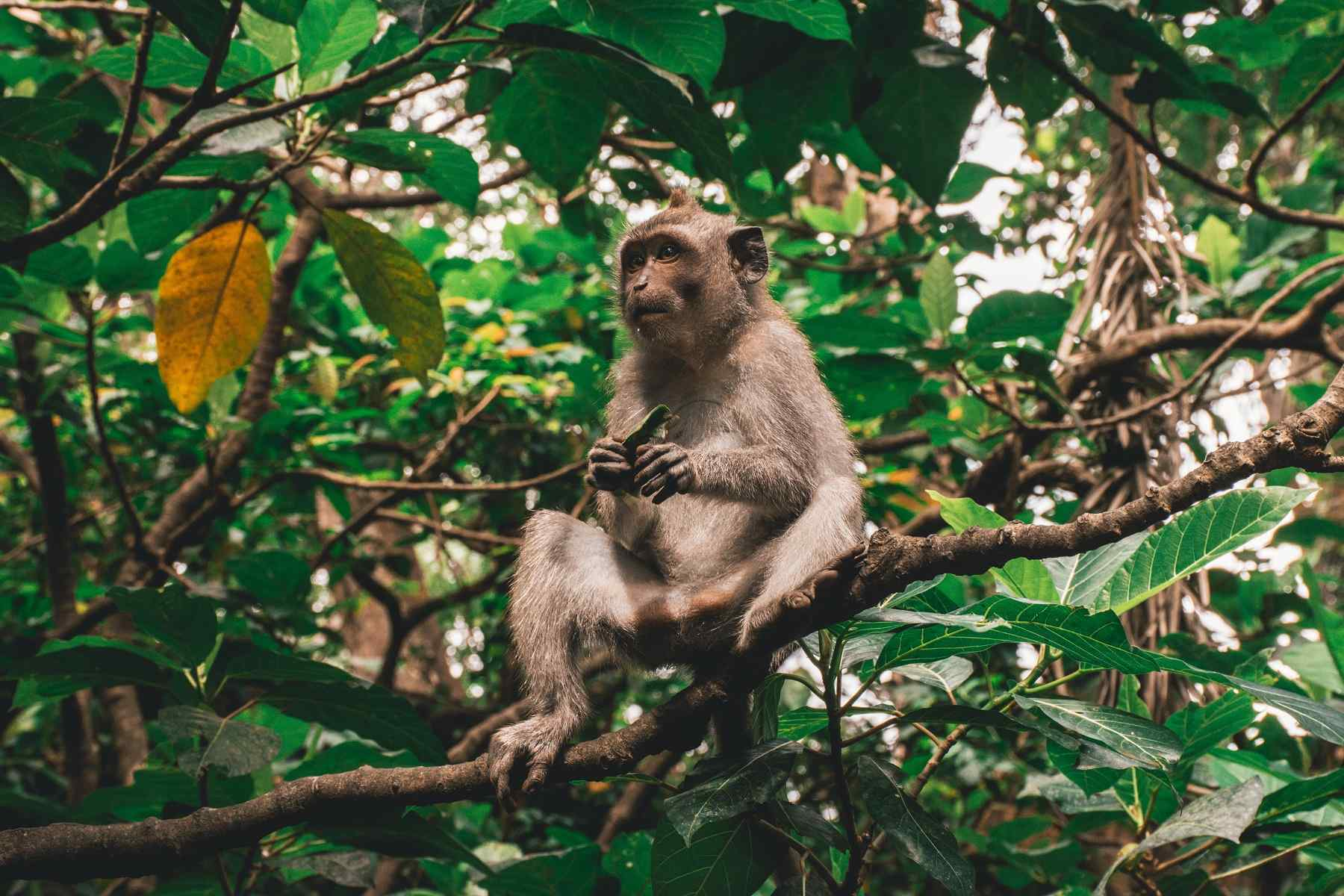 foresta delle scimmie di ubud
