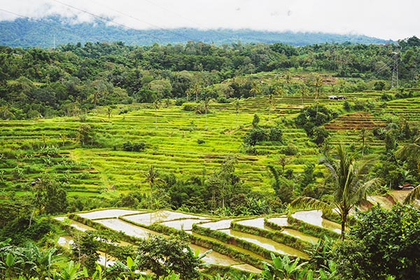 terrazze di riso Jatiluwih