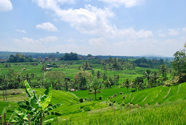 jatiluwih terrazze di riso